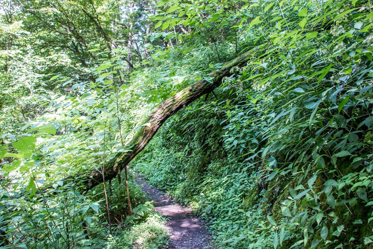 下山途中の道