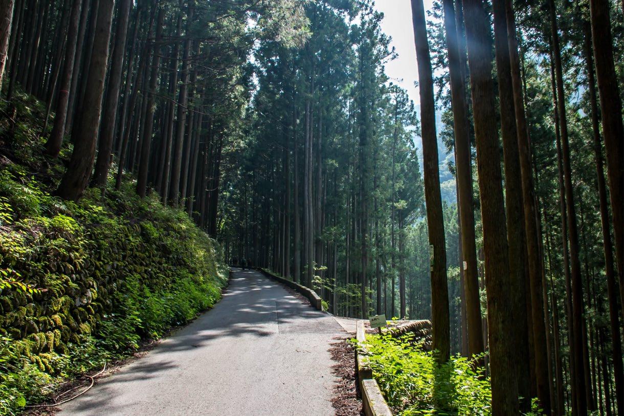 川苔山の道をどんどん進む