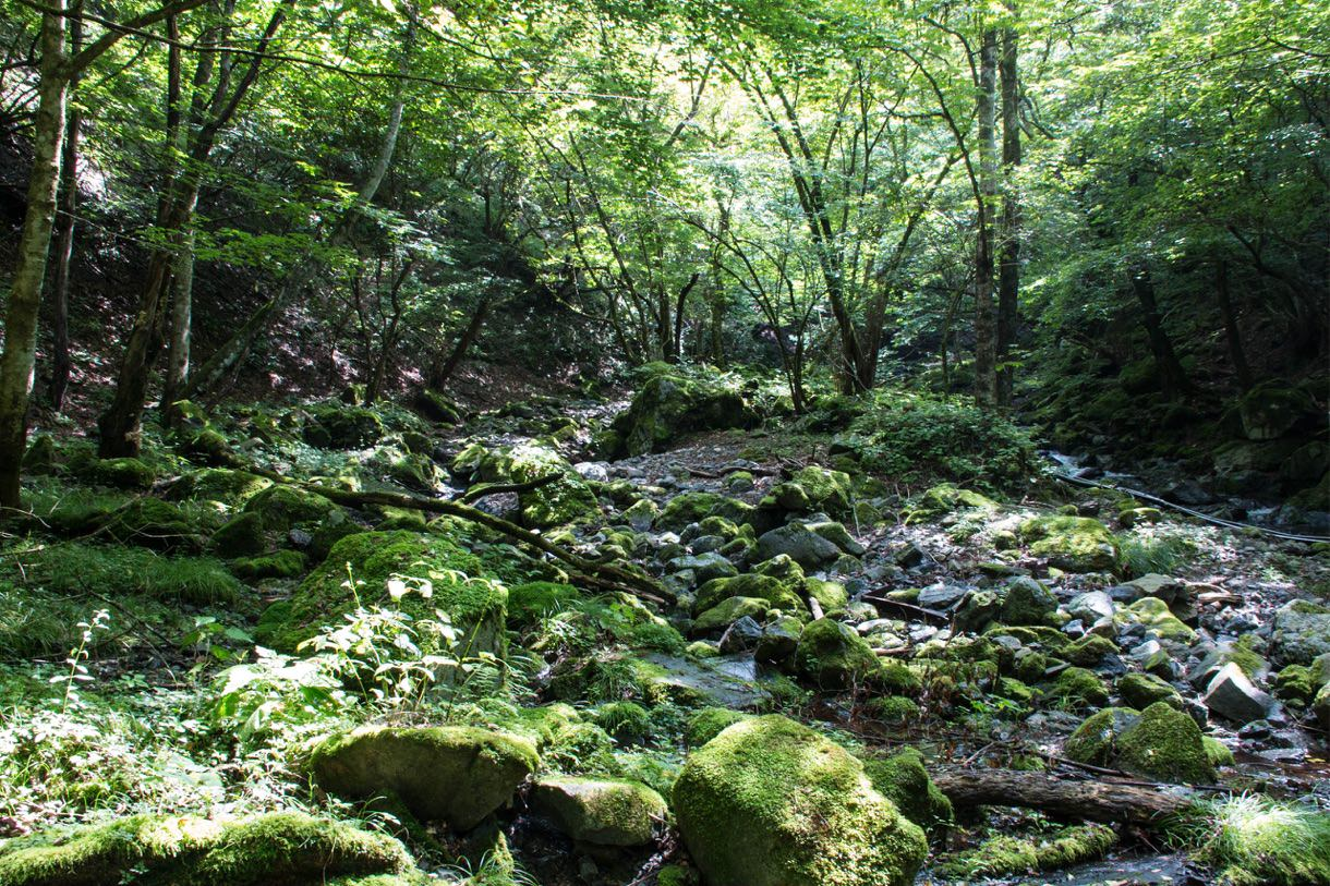 川苔山第一の沢
