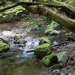 奥多摩の「川苔山」へ日帰り登山。 キレイな川と滝、苔が見事ですよー!