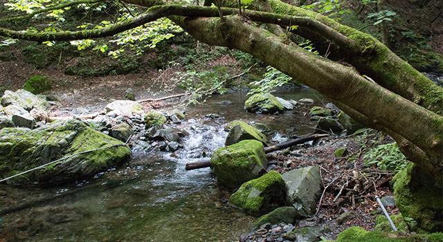 川苔山記事のアイキャッチ