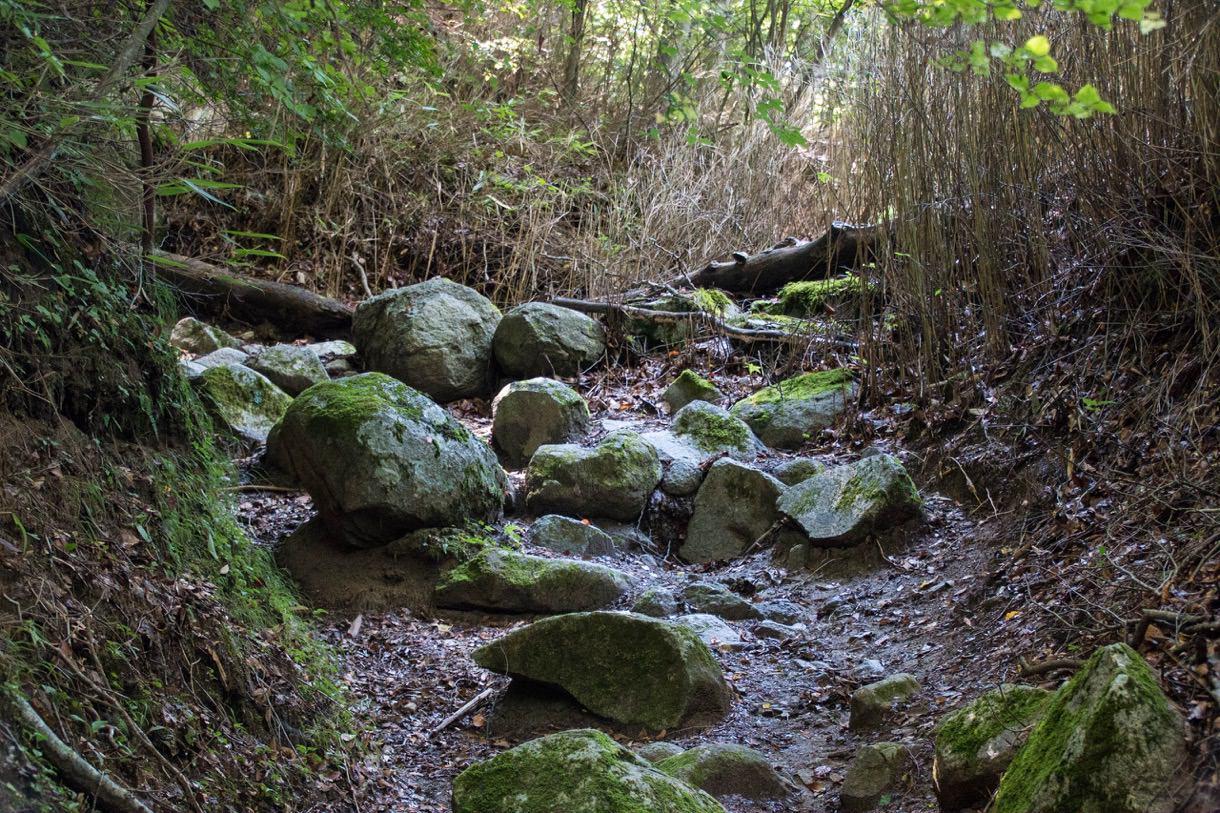 大きめの岩が多い道