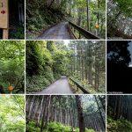 川苔山フォトギャラリー記事のアイキャッチ