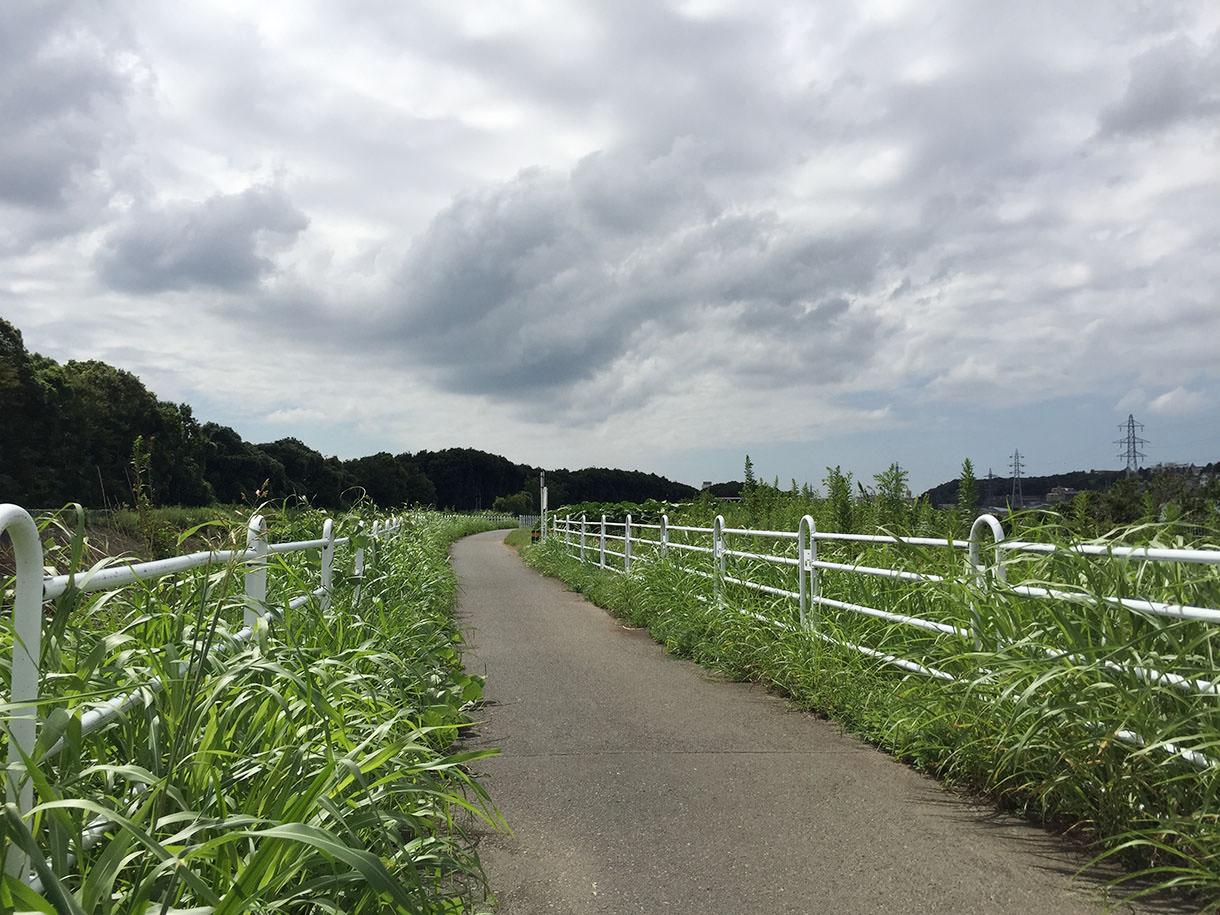 田舎っぽくい風景の気持ち良い道
