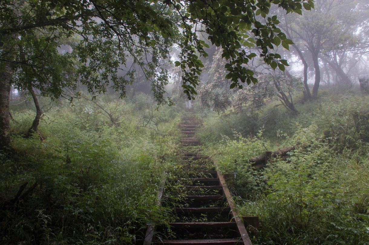 迷いの森への入口みたいな