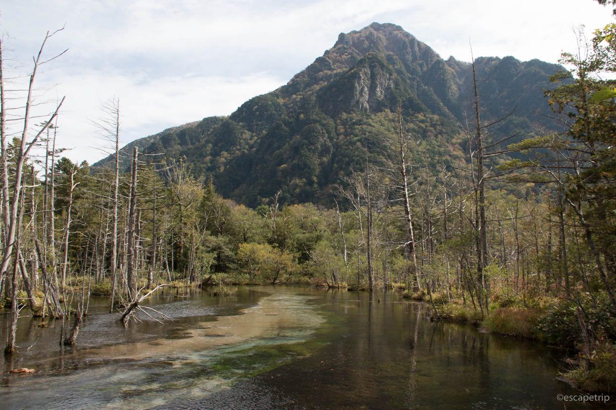 山と枯木と梓川の風景