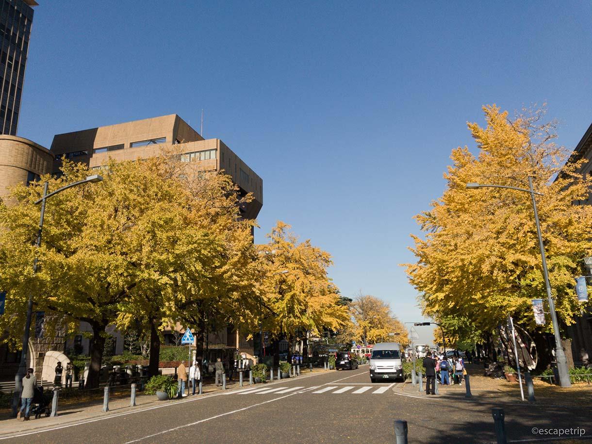 日本大通りのイチョウの紅葉その1