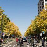 横浜にある「日本大通り」の紅葉が見頃。写真撮ってきた