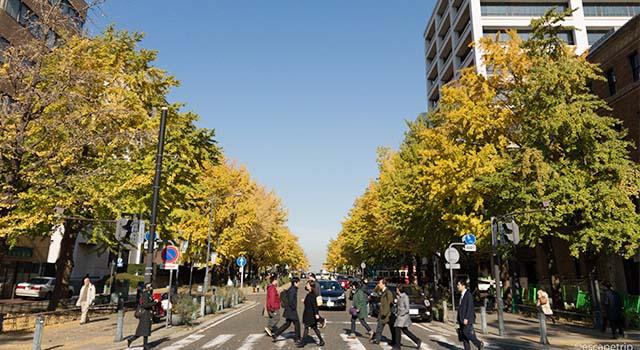 横浜日本大通り紅葉記事のアイキャッチ