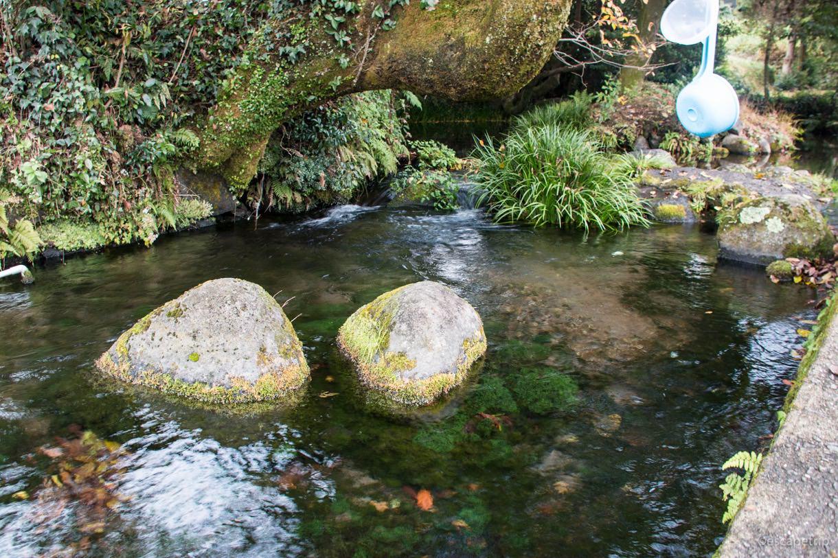 池の川水源の水