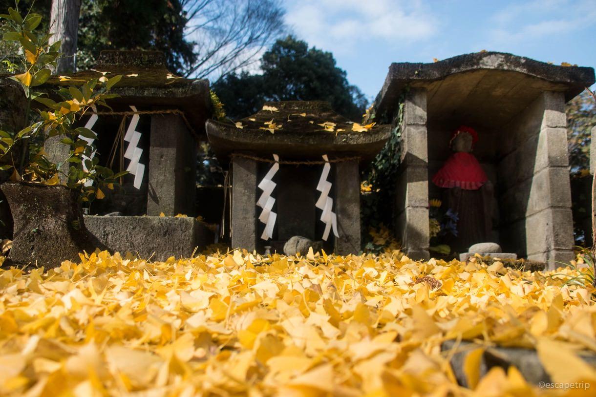 阿蘇神社の紅葉