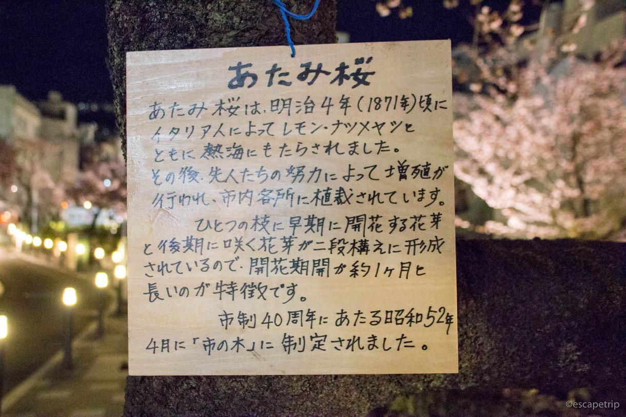 あたみ桜についての説明書き