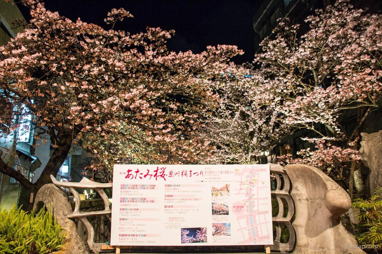 糸川桜まつりについて
