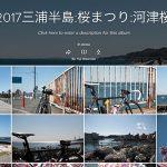 【フォトギャラリー】三浦半島、桜まつり「河津桜」の写真たち