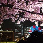 横浜・みなとみらい周辺の「夜桜」撮ってきた。ナイトライド予習も兼ねて…!