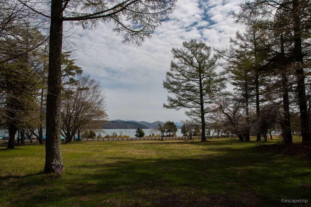 山中湖の木陰