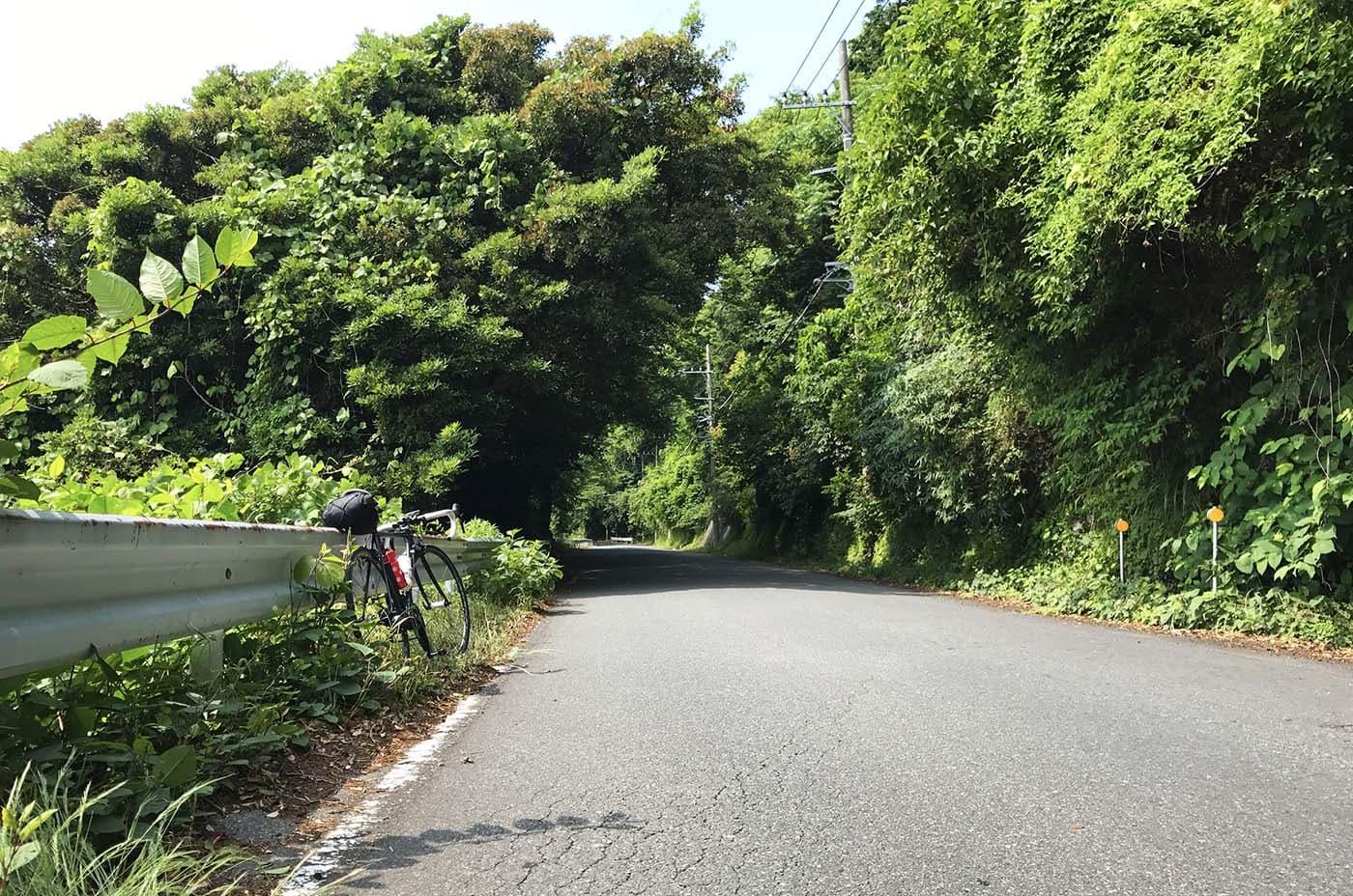 緑生い茂る道とロードバイク