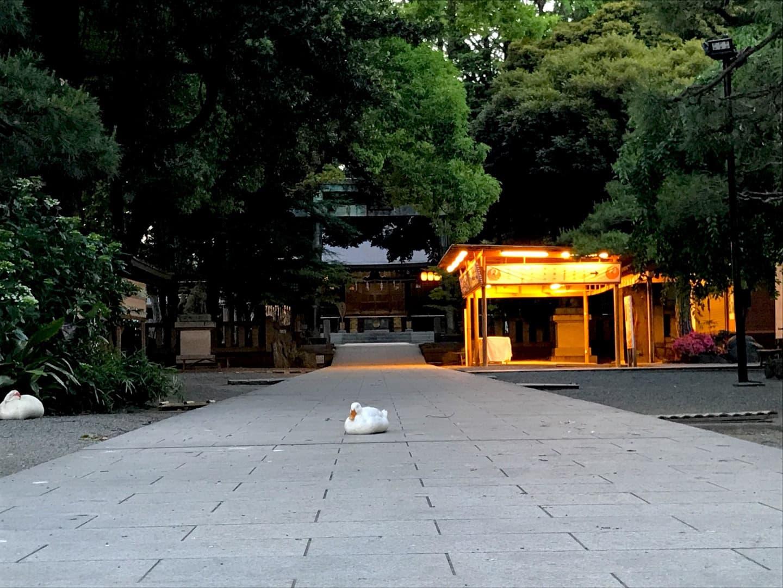 参道の真ん中に座るアヒル