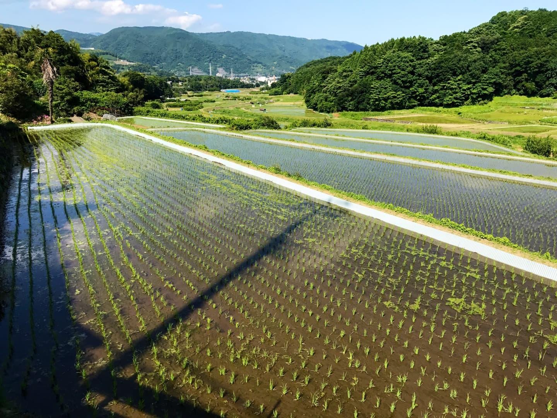 水田の風景