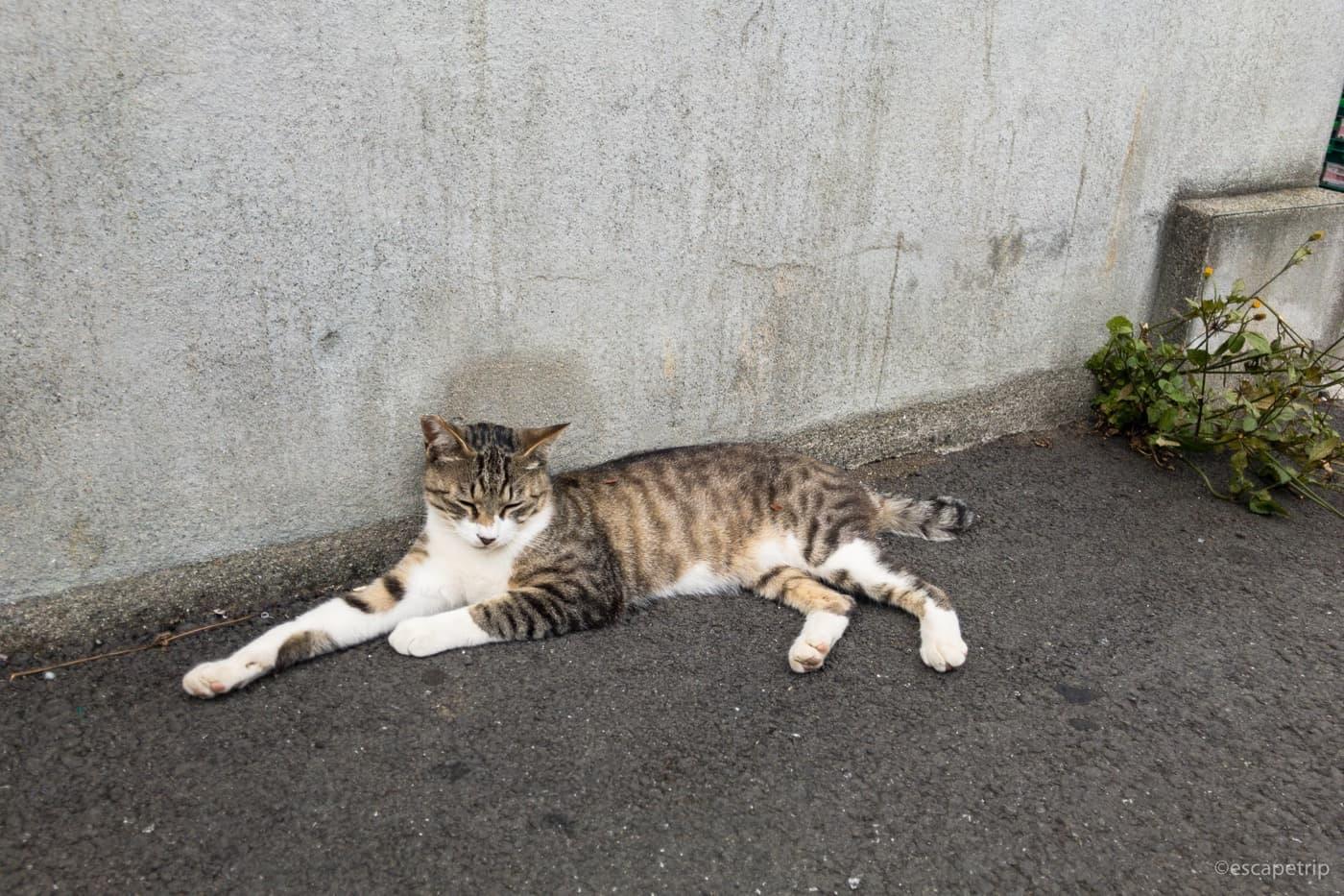 警戒心ゼロのネコ