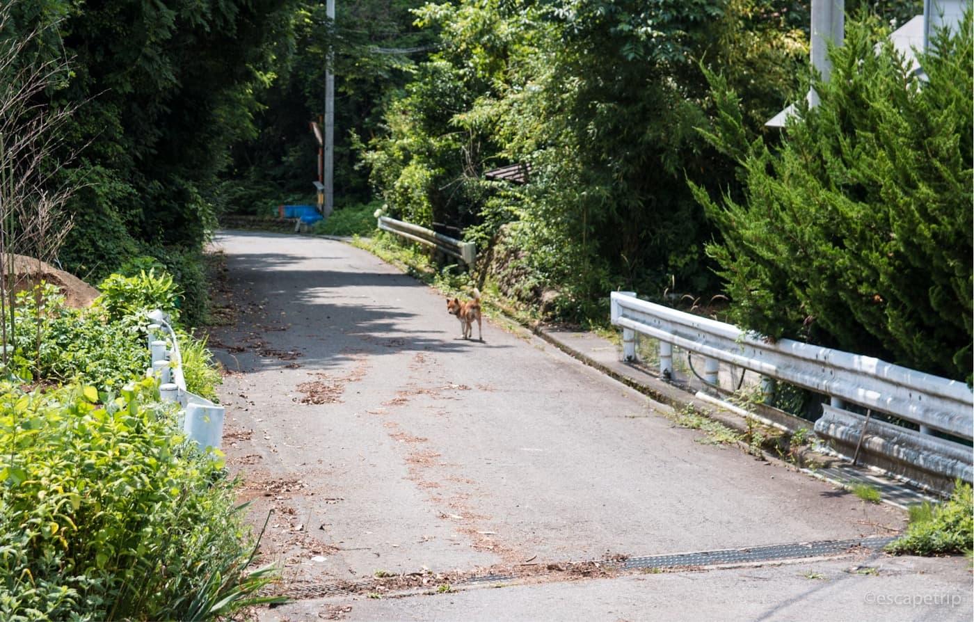 檜原きのこセンター近くの犬