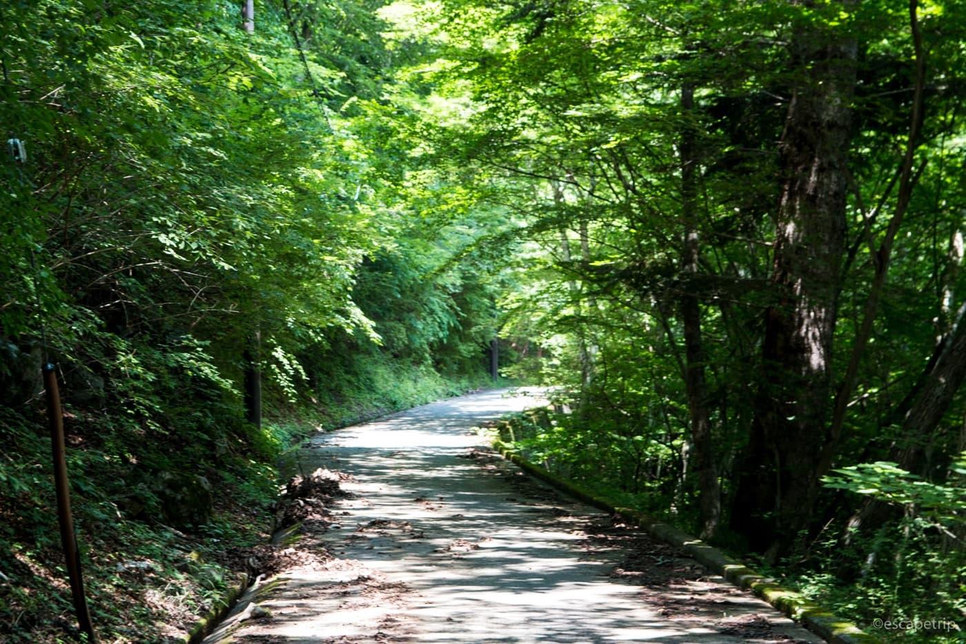 新緑の坂道