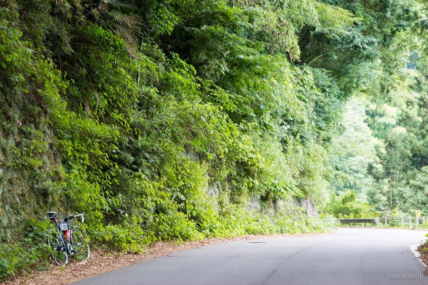 新緑の中に佇むロードバイク