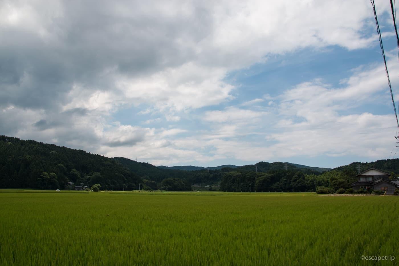 田んぼと夏の雲