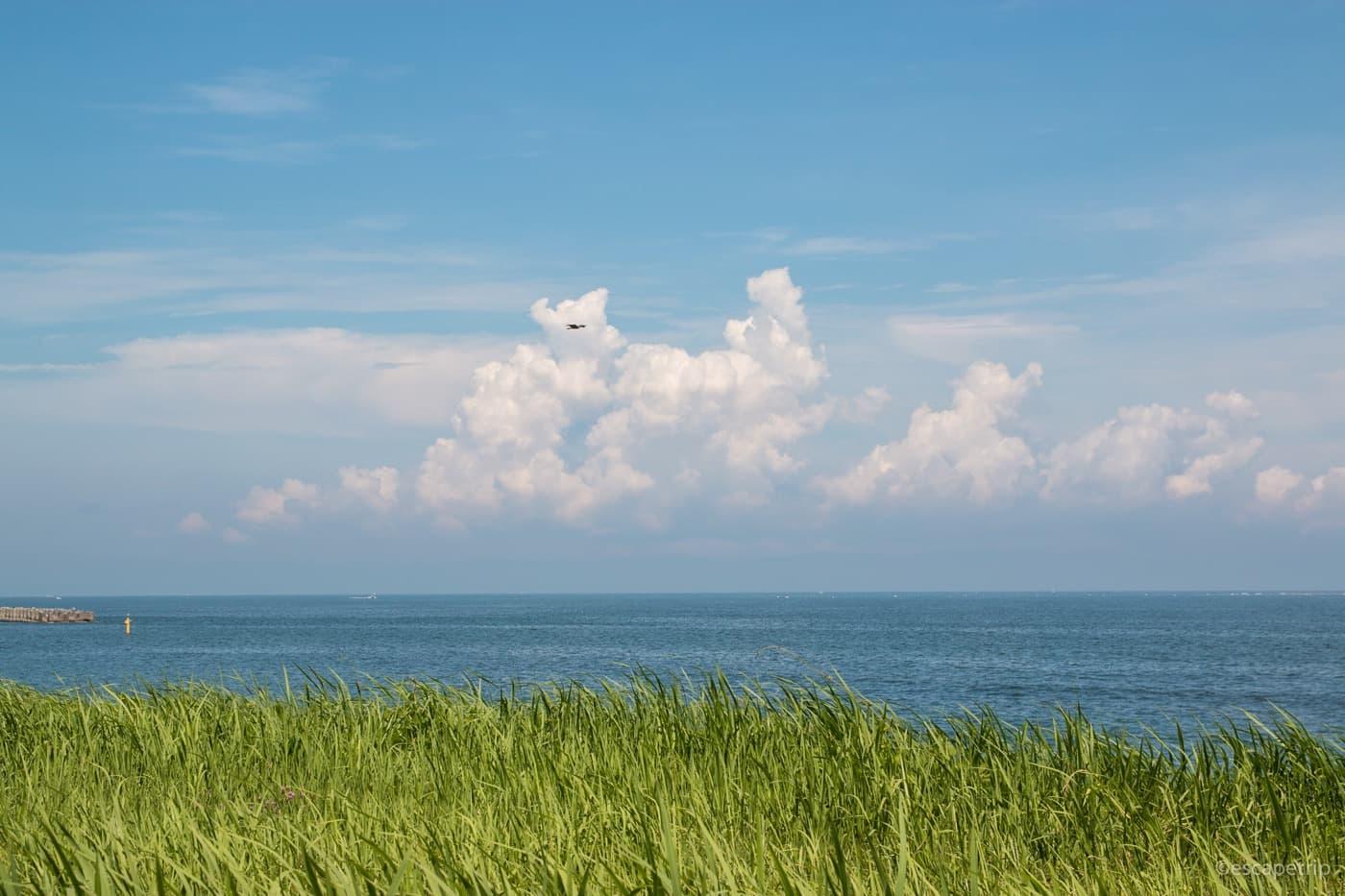 海と入道雲