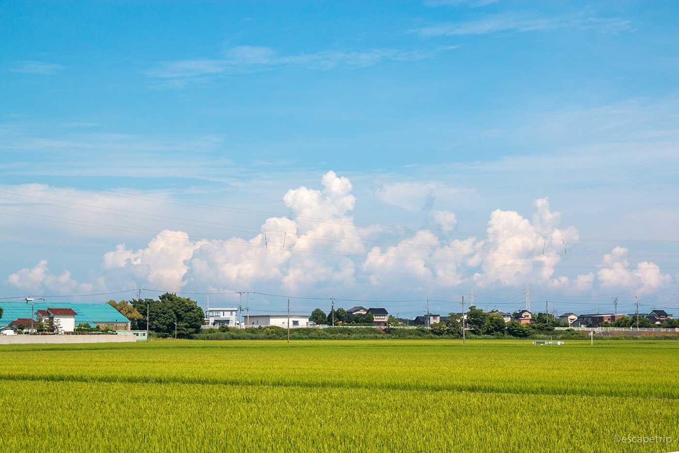 夏の入道雲と田んぼ