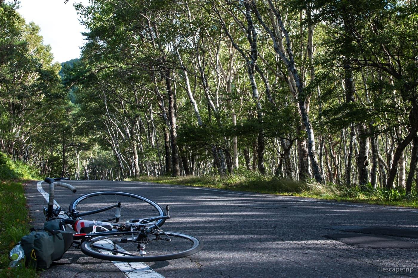 白樺の木とロードバイク
