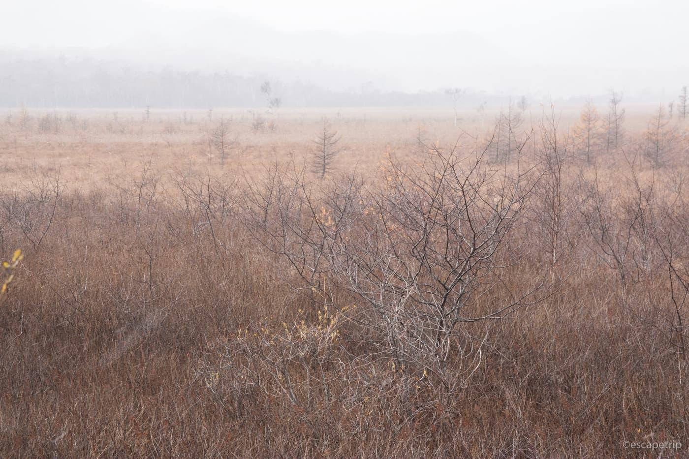 戦場ヶ原の湿原