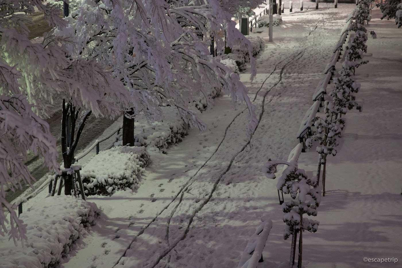横浜に積もった雪