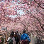 【2018年3月まとめ】更新した記事一覧。花粉症の季節にZwiftを。