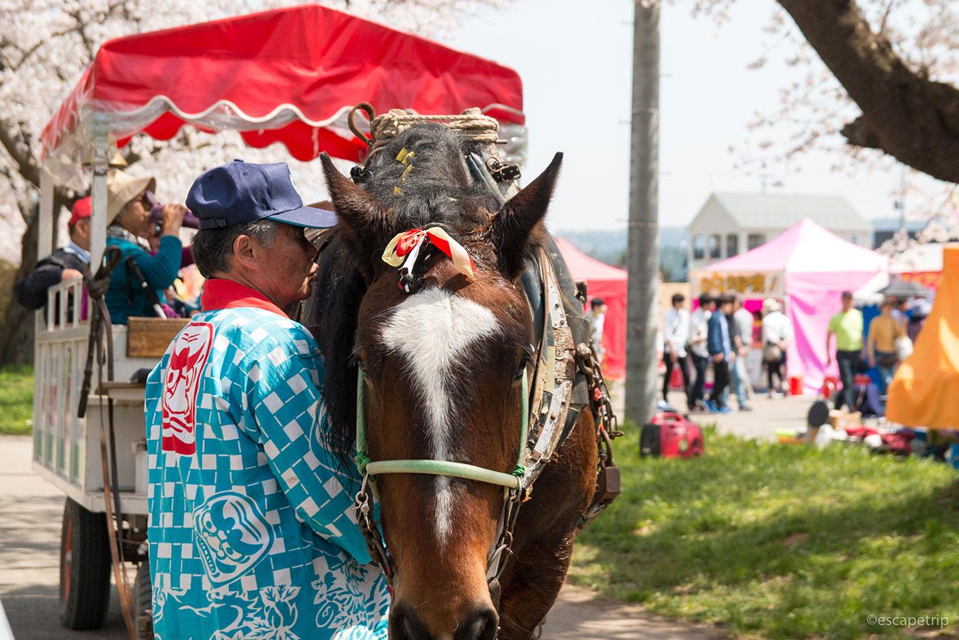 北上展勝地の馬車を引く馬