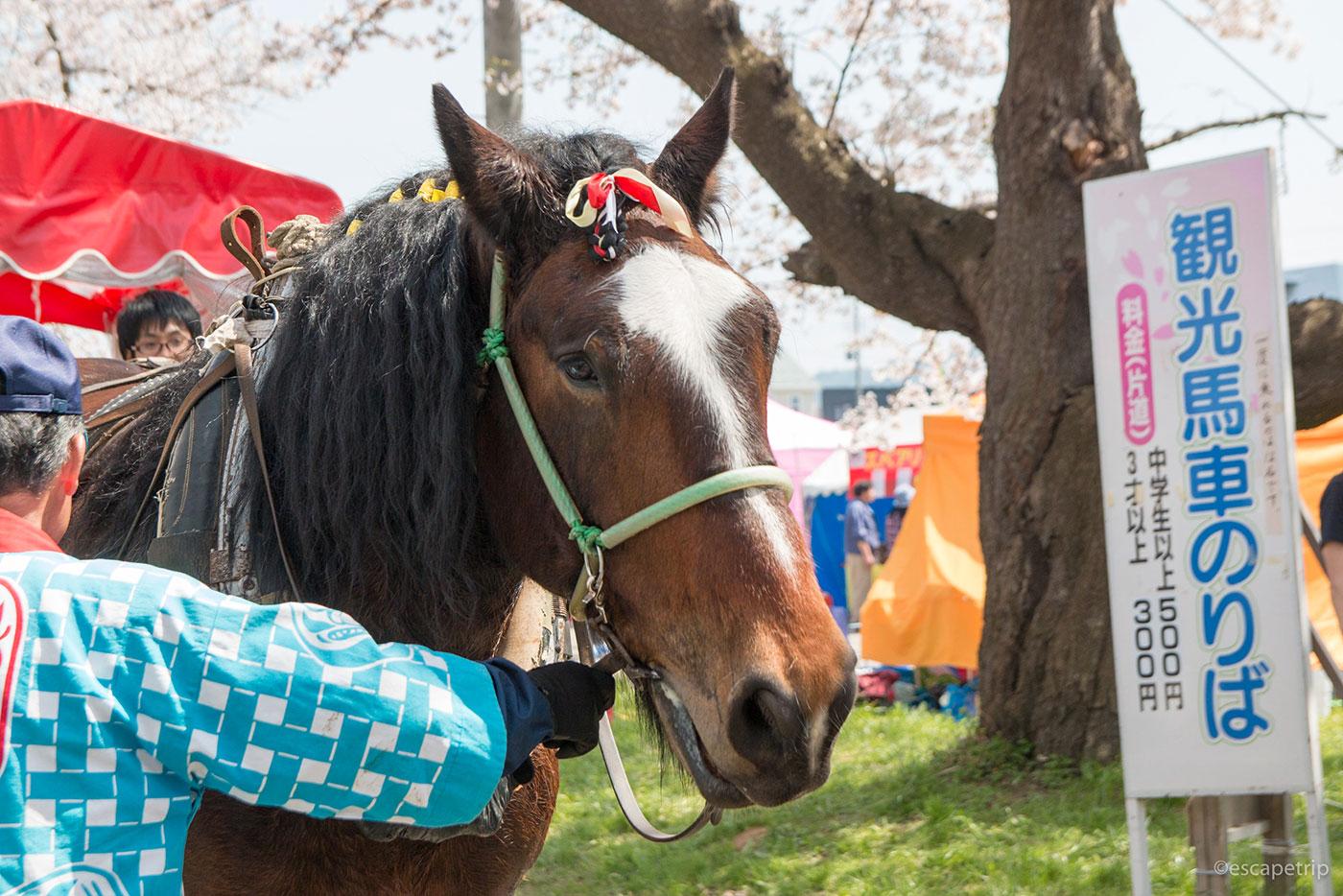 北上展勝地の馬
