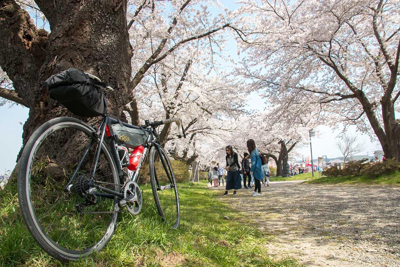 桜のトンネルとロードバイク