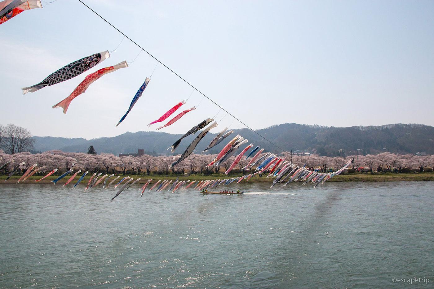 北上展勝地の鯉のぼりと桜と北上川