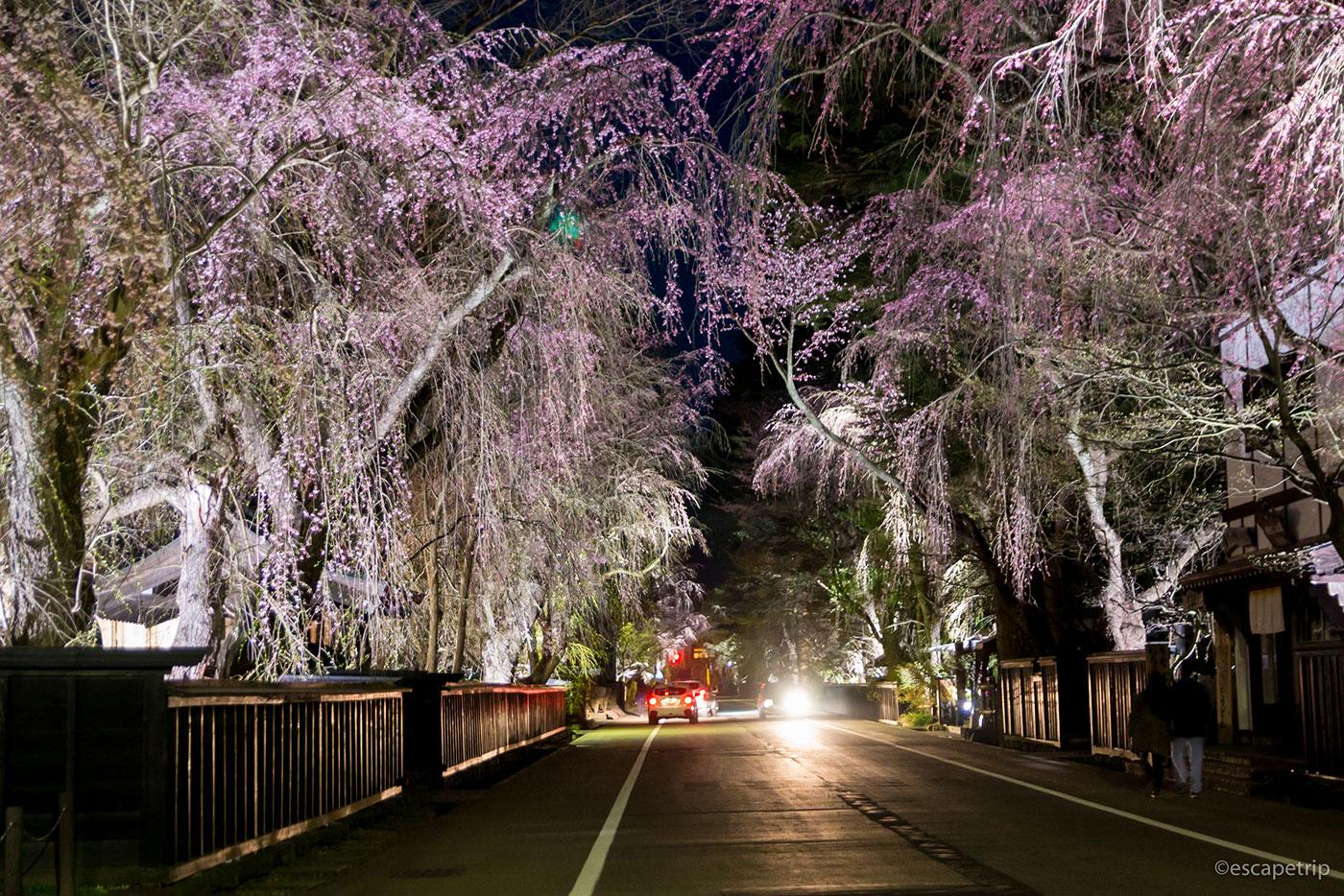 角館の夜桜と道
