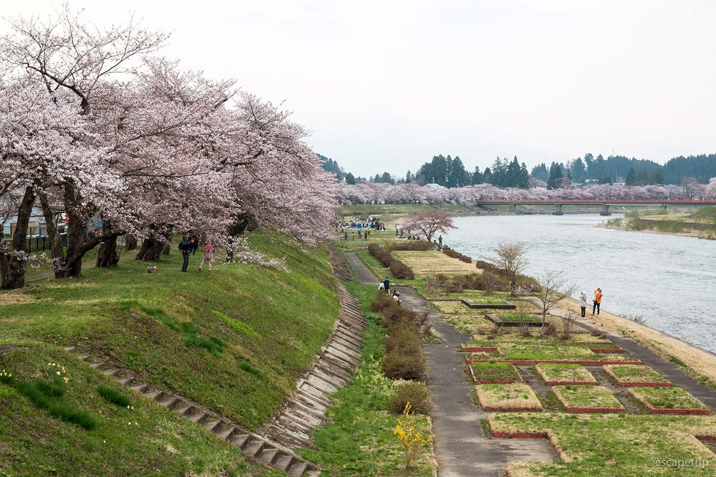 桧木内川の桜並木