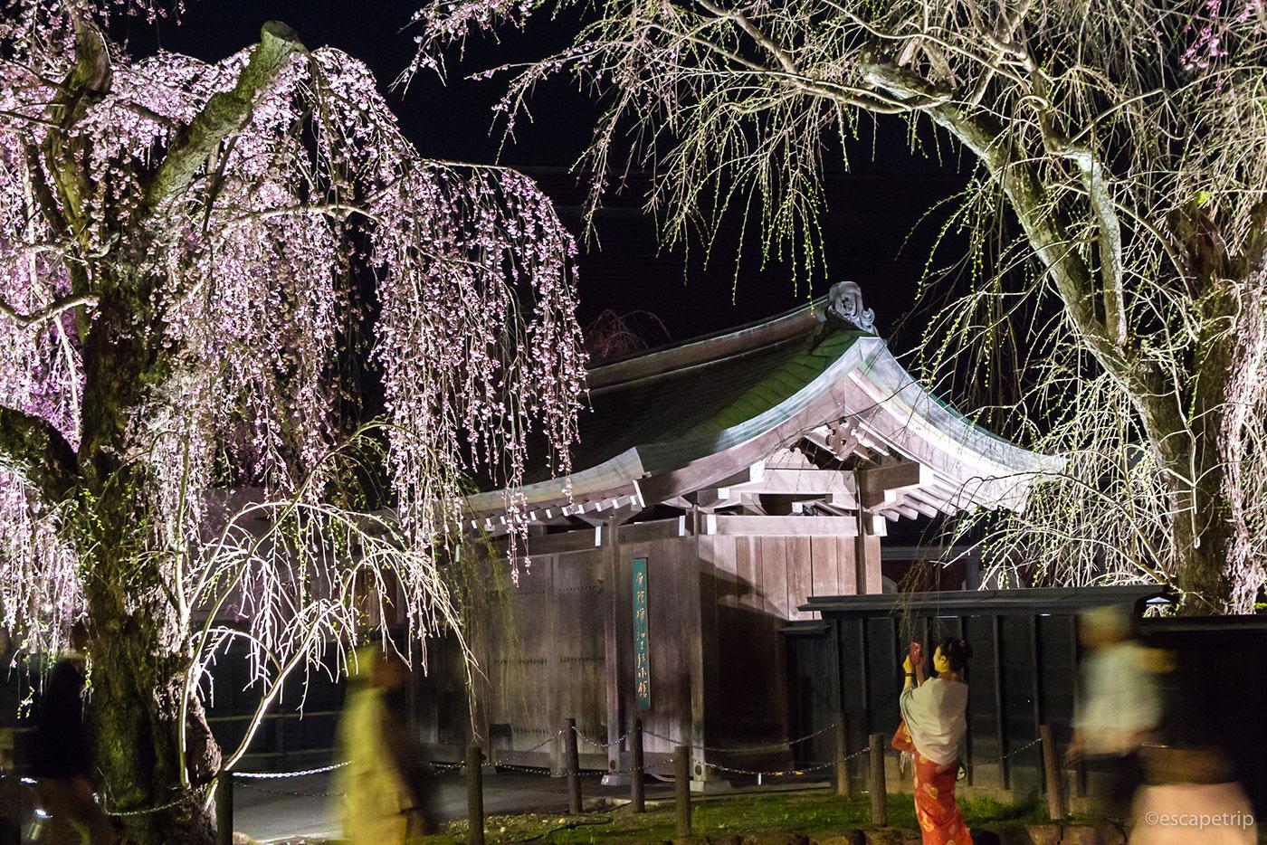 角館の夜桜と町並み