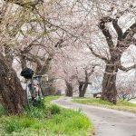 みちのく小京都。武家屋敷「角館」と桜ポタリング【連載3/3】
