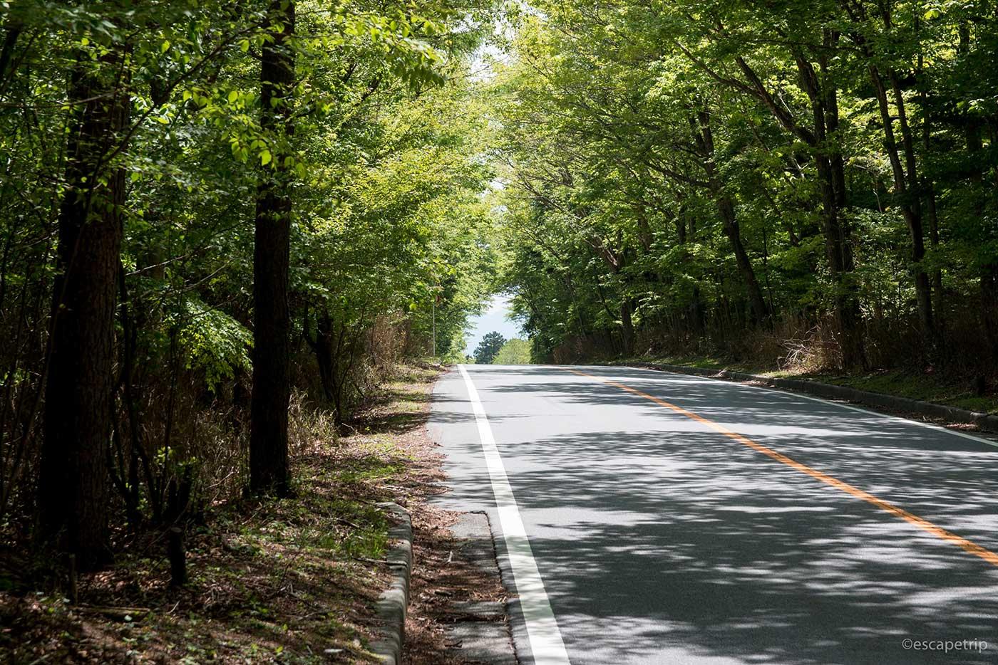 青木ヶ原樹海の道
