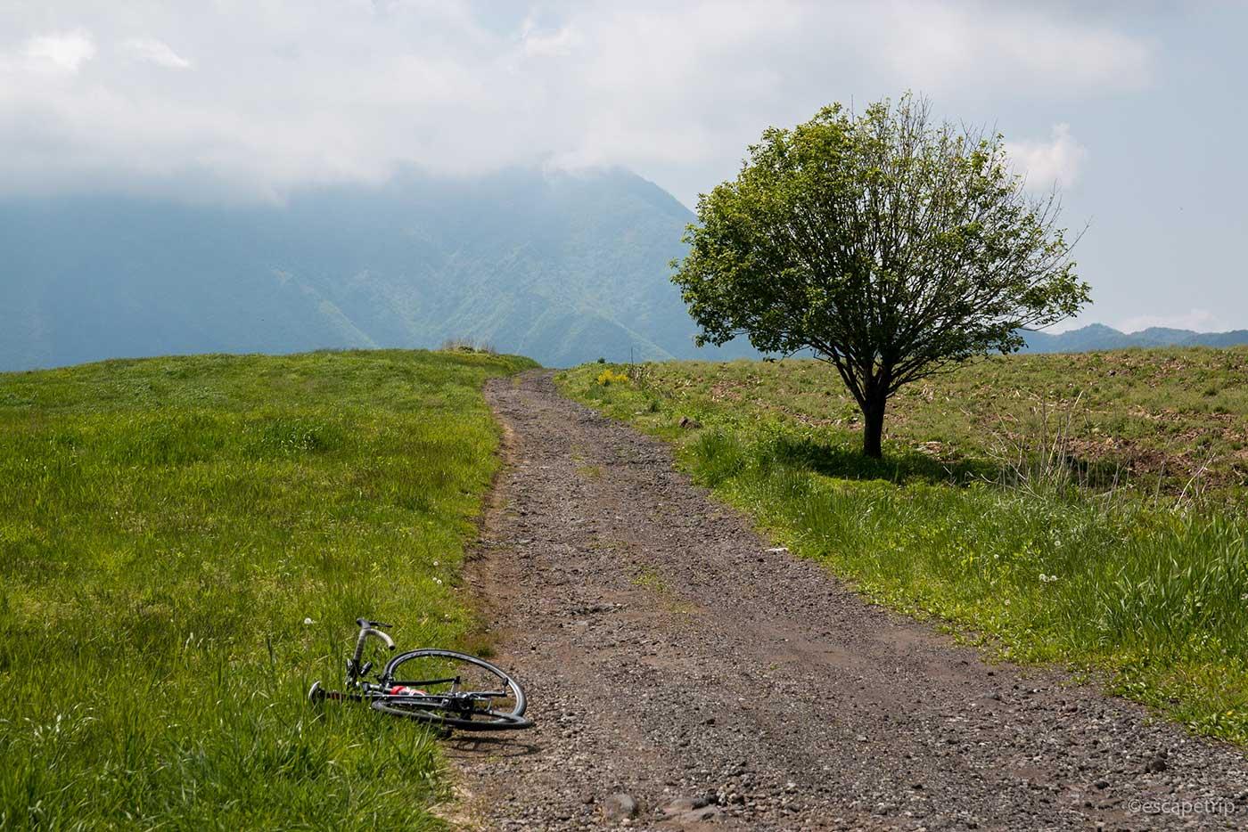 立ち木とロードバイク