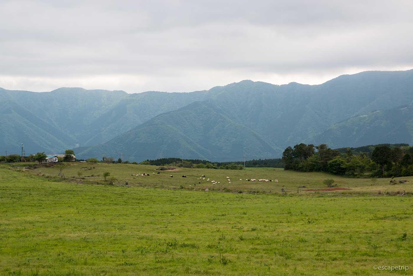 富士山近くの牧場