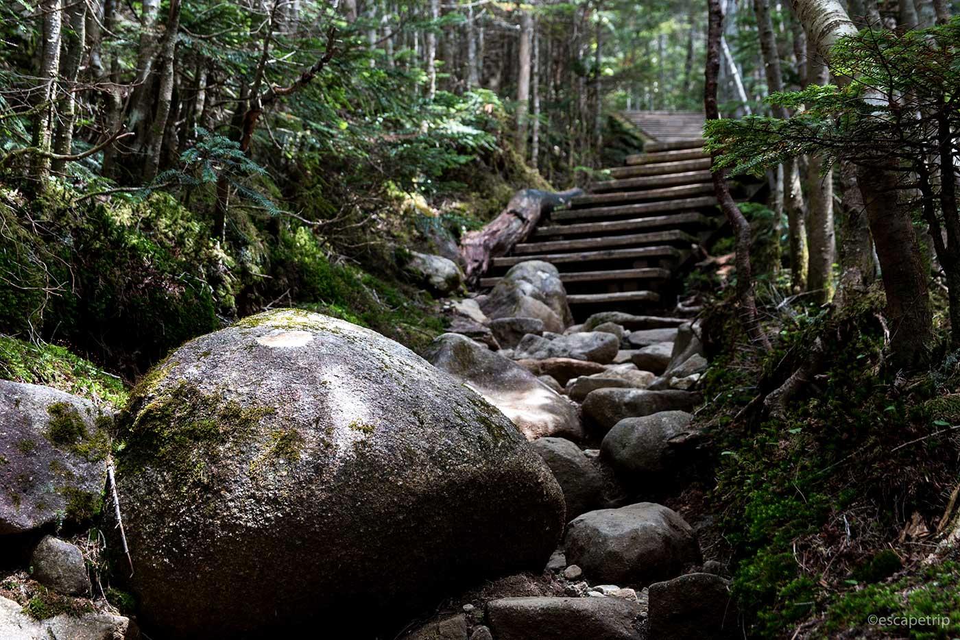夢の庭園に向かう登山道