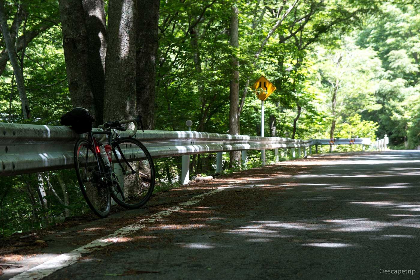 木陰とロードバイク