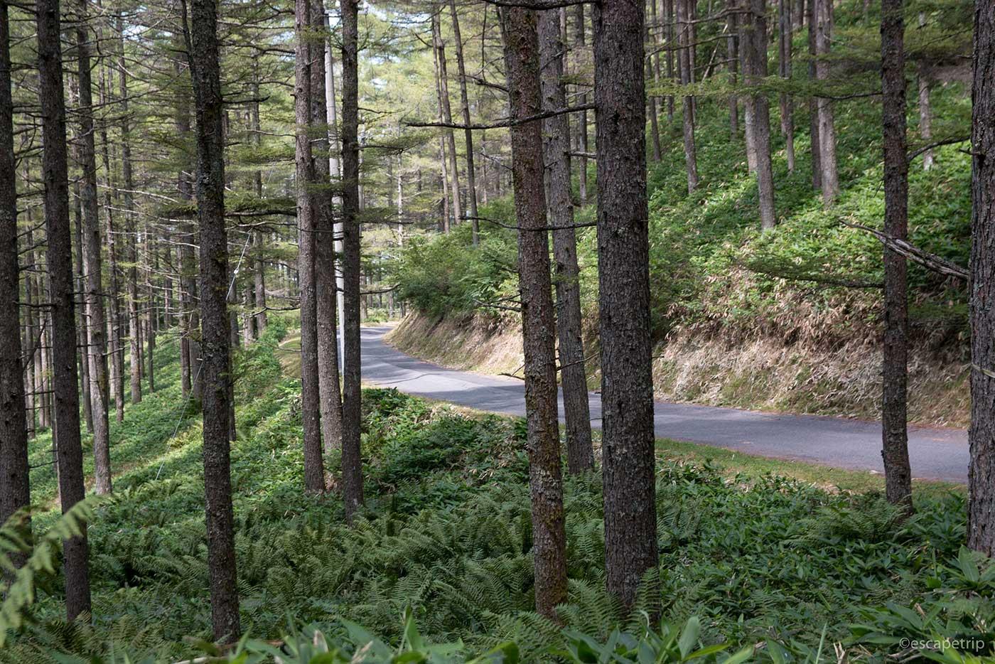 高ボッチ高原へ向かう道