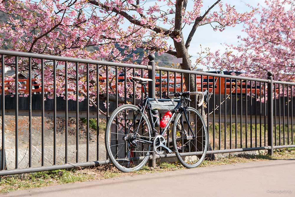 河津桜とロードバイク