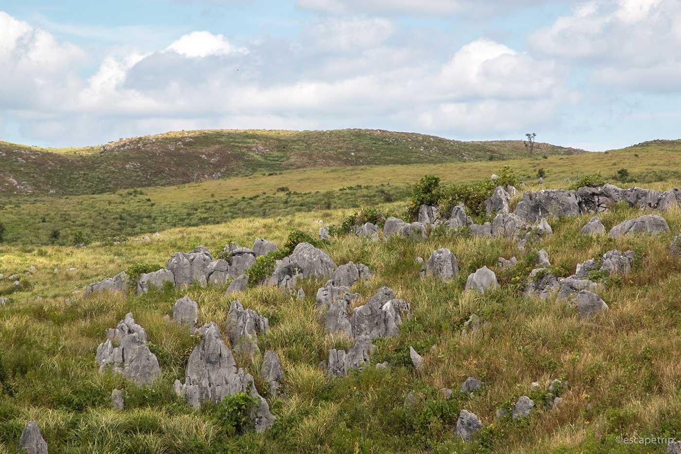 秋吉台カルスト台地の石灰岩